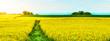 Leinwandbild Motiv Spring landscape background banner - Beautiful panorama from a Canola Field in Germany