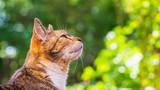 Fototapeta Zwierzęta - Domowy kot bawi się na trawie
