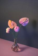 Pink Ranunculus Flowers In Glass Jar