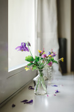 Columbines And Various Cut Flowers Inside Old-fashioned Glass Bottles Close To Window