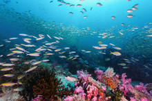 Colorful Coral Reef Full Of Fish