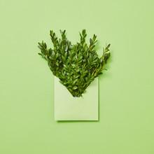 Green Leaves Twigs In An Envel...