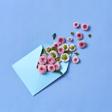 Envelope With Hardy Chrysanthe...