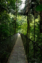 Crossing A Hanging Bridge During An Adventure Trip In Costa Rica