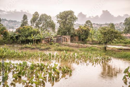 Fotografija swampy marshland in kampala uganda africa