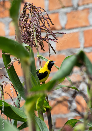 ave, naturaleza, fauna, amarilla, animal, inhospitalario, aviar, variopinto, suc Canvas Print