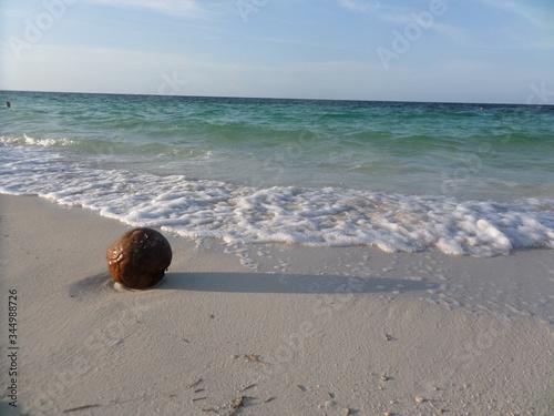 Photo Coconut in the sand, cayo coco, cuba