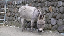 Boring Donkey In The Ranch