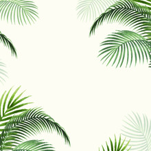 Palm Leaves Frame Background T...