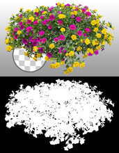 Cut Out Flowers. Blue Flowers Isolated On Transparent Background Via An Alpha Channel. Hanging Flowers Basket. Flower Bed For Garden Design Or Landscaping. High Quality Clipping Mask.