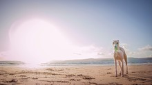 Beige Great Dane Dog Standing In The Sandy Beach