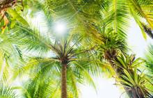 Palm Tree Leaves Of Coiba Island, Santa Catalina, Panama, Central America