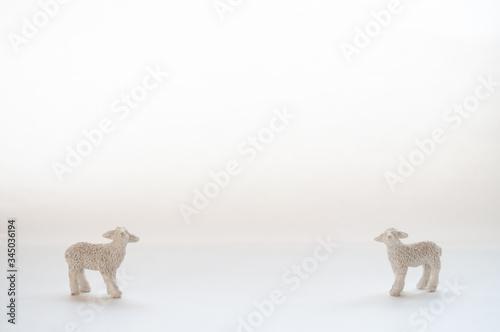 ソーシャルディスタンス 2頭の羊 コピースペース 白背景 Fototapete