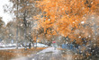 Leinwandbild Motiv Autumn park in the first snow