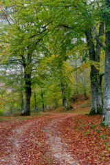 romantic path in the woods in autumn