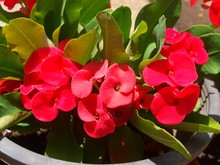 Exotic Bright Red Flowers And ...