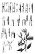 Grafting Methode For Trees Col...