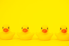 Four Yellow Rubber Ducks Side ...