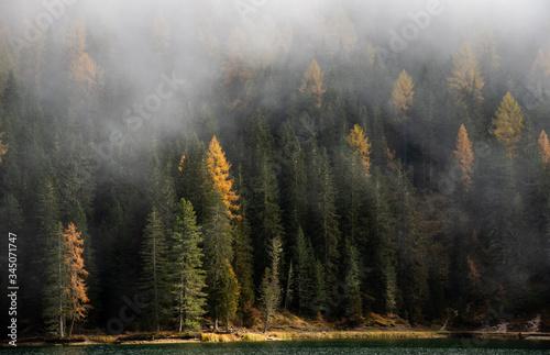 Autumn forest mountain landscape dolomiti mountains Italy Canvas Print