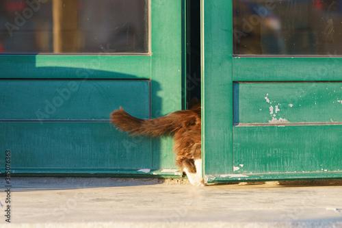 Red cat came home. He enters the ajar door Wallpaper Mural