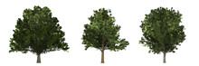 Tree Collection With Oak (Quer...