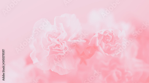 Valokuvatapetti Light pink carnation flowers, soft pastel 16:9 panoramic format background
