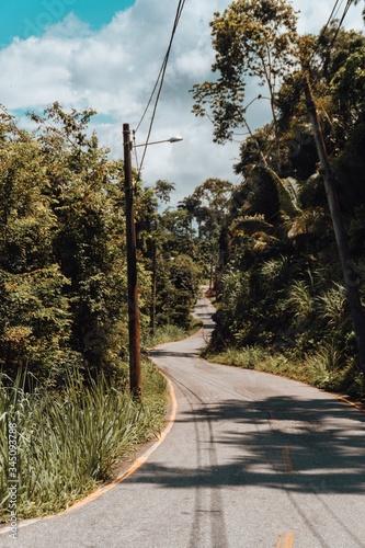 Beautiful landscape of a weird curvy road in Rio de Janeiro jungle Canvas Print