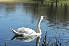 Vogelfotografie Am See