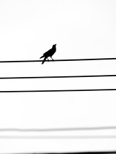 Crow Stood On The Wire And Looked Up