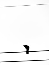 Crow Stood On The Cord And Shouted