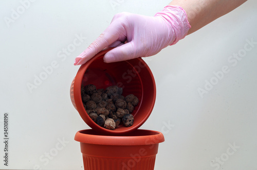 gloved hand layers expanded clay aggregate drainage in pot for transplanting hou Canvas Print