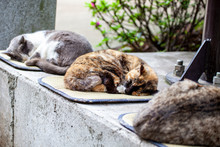 Three Cat Is Sleeping
