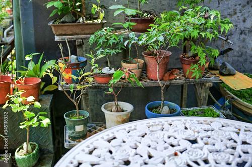 Photo 樹木の鉢植えが載った庭の棚