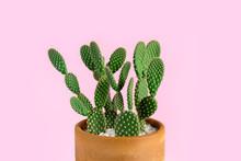 Green Cactus With Yellow Polka...