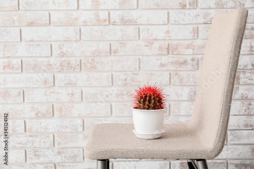 Photo Cactus on chair near brick wall. Hemorrhoids concept