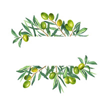 Fresh Green Olive Berries And ...