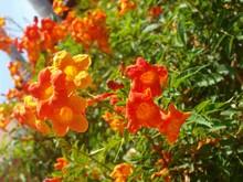 Orange Yellow Bright Flowers O...