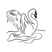 Swan Black White Bird Isolated Illustration Vector, Hand Draw, Sketch