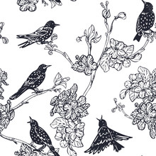 Starlings And Flowering Branch...