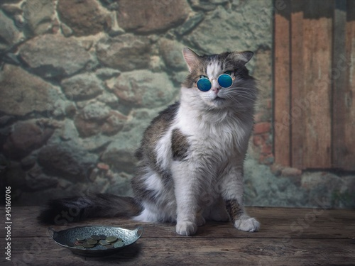Cat in sunglasses asks alms at an old wall Wallpaper Mural