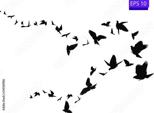 Fotografía Flock of flying birds