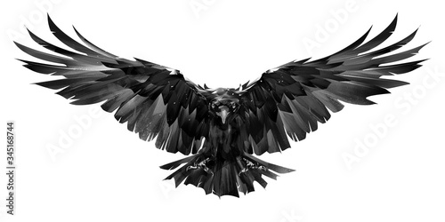 Papel de parede painted raven bird in flight on a white background