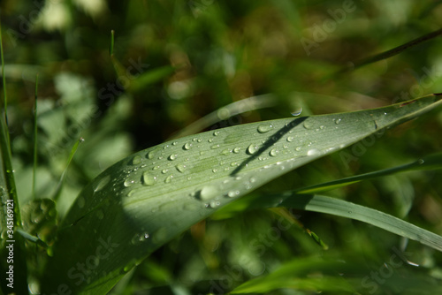 Fotografie, Obraz pianta gocce acqua piove temporale acqua è vita foglie goccia