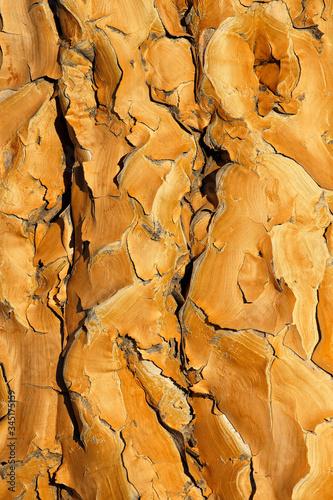 Photo Quiver tree bark background