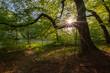 słońce w lesie