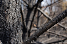 Burned Forest And Tree
