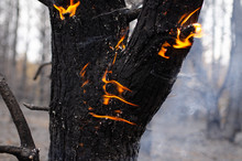 Burning Part Of The Tree