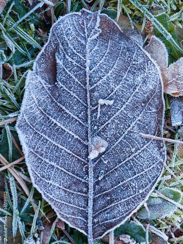 Obraz zbliżenie brązowego liścia pokrytego szronem - fototapety do salonu