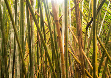 Bamboo Forest, Guangxi, China