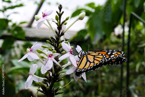 Photo monarch butterfly on a flower